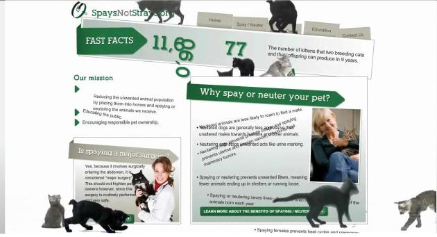 Spays Not Strays - Cats are taking over the internet