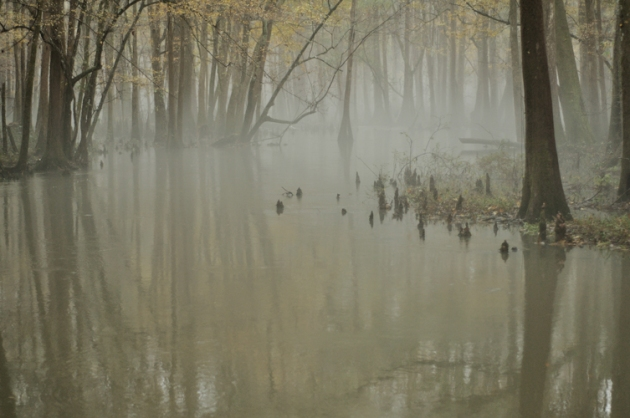 Foggy Swamp: Mariannis Florida, USA 2009. Copyright Guy Grigsby 2009