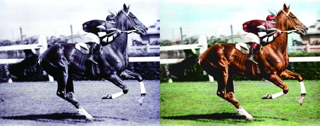 Phar Lap Photo Colourised