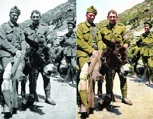 John Simpson Kirkpatrick & Donkey Photo Colourised